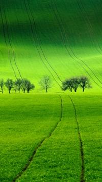 Аватар вконтакте Зеленое поле и деревья вдали