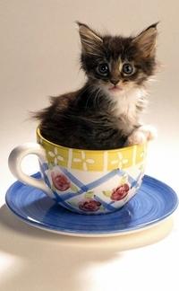 Аватар вконтакте Забавный маленький котенок сидит в кофейной чашке с блюдцем