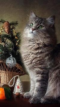 Аватар вконтакте Кошка сидит у новогодней корзины