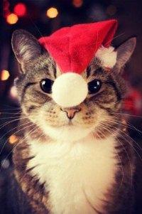 Аватар вконтакте Кот в новогодней шапке