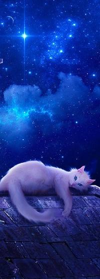 Аватар вконтакте Белая кошка лежит на крыше на фоне ночного неба, фрагмент работы от by alanleal22