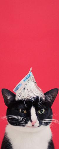 Аватар вконтакте Черно-белый кот с шапочкой на голове, by princesscheeto