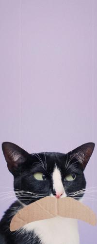 Аватар вконтакте Черно-белый кот с картонкой вместо усов, by princesscheeto