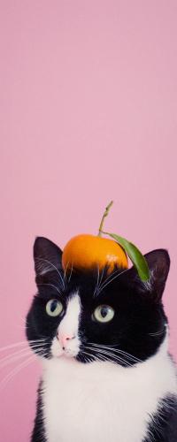 Аватар вконтакте Черно-белый кот с апельсином на голове, by princesscheeto