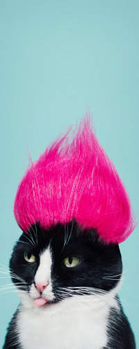 99px.ru аватар Черно-белый кот с розовым эрокезом на голове показывает язык, by princesscheeto