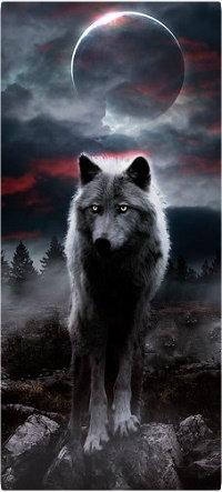 Аватар вконтакте Волк стоит на фоне полной луны