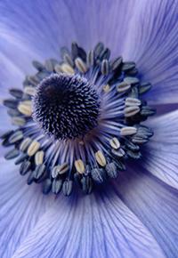 Аватар вконтакте Красивый нежно-фиолетовый цветок приближенным планом