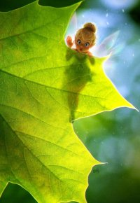 Аватар вконтакте Маленькая фея Динь-Динь прячется за большим листом