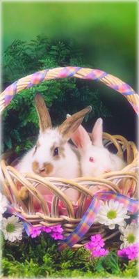 Аватар вконтакте Кролики сидят в корзинке среди цветов