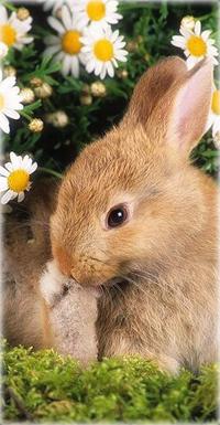 Аватар вконтакте Кролик сидит в траве возле белых ромашек
