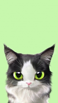 Аватар вконтакте Милый черно-белый котенок на зеленом фоне