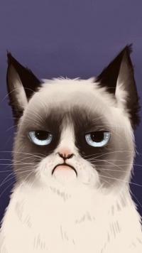 Аватарка смешная кот