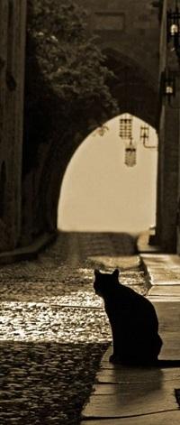 Аватар вконтакте Черная кошка сидит на тротуаре