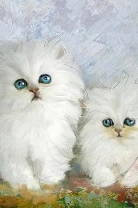 Аватар вконтакте Два милых белых котенка