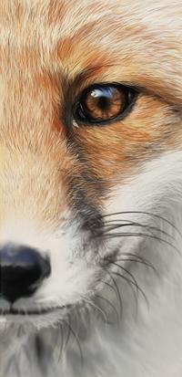 99px.ru аватар Портрет лисы крупным планом, by Tyfflie