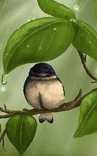 99px.ru аватар Птичка на ветке под дождем, by Veronica Minozzi