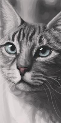 Аватар вконтакте Серия кошка с голубыми глазами, by Meorow