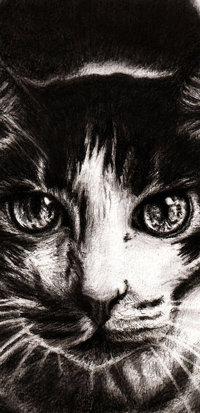 99px.ru аватар Черно-белый портрет кошки, by Meorow
