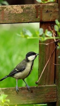 Аватар вконтакте Птичка сидит на заборе