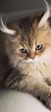 Аватар вконтакте Милый симпатичный котенок