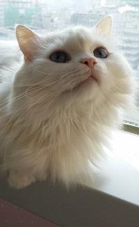 Аватар вконтакте Белый кот сидит на окне