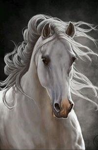 Аватар вконтакте Красивая рисованная белая лошадь