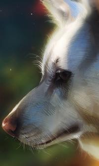 Аватар вконтакте Портрет белого волка в профиль на размытом фоне, by TamberElla
