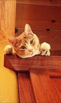 Аватар вконтакте Рыжий кот положил голову и лапки на мебель