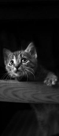 Аватар вконтакте Маленький котенок стоит у перекладины спинки стула