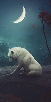 Аватар вконтакте Белый волк сидит на земле в лунную ночь