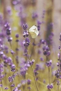 Аватар вконтакте Белая бабочка сидящая на фиолетовом полевом цветке