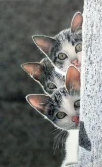 Аватар вконтакте Три мордочки котят выглядывают из-за стены