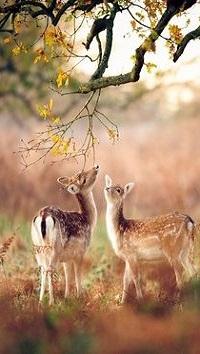 99px.ru аватар Два оленя стоят под деревом