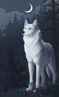 Аватар вконтакте Белый волк стоит в лесу под луной