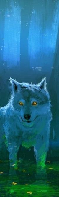 Аватар вконтакте Волк с желтыми глазами стоит в воде