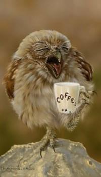 99px.ru аватар Сова с чашкой кофе в лапке, (coffee / кофе), by Animal75Artist