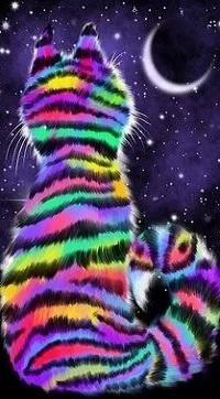 Аватар вконтакте Радужный кот смотрит на месяц
