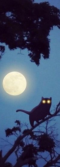 Аватар вконтакте Кот со светящимися глазами сидит на ветке дерева, на фоне полной луны