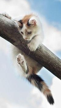 Аватар вконтакте Котенок повис на деревяшке, фотограф Екатерина Саламайкина