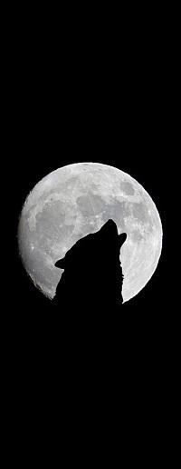 Аватар вконтакте Силуэт волка на фоне полной луны