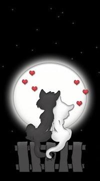 Аватар вконтакте Пара влюбленных кошек сидит на заборе и любуется полной луной