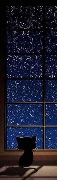 Аватар вконтакте Котенок смотрит в окно на ночное небо