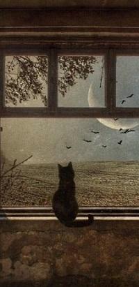 Аватар вконтакте Кошка сидит на окне и смотрит на луну