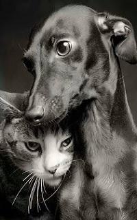 Аватар вконтакте Собака рядом с кошкой