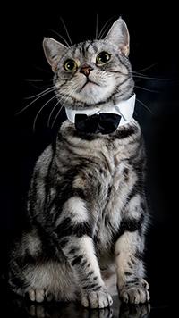 99px.ru аватар Серый кот с галстуком-бабочкой, by Elizabeth E