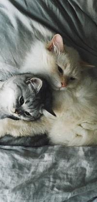 Аватар вконтакте Два милых котенка