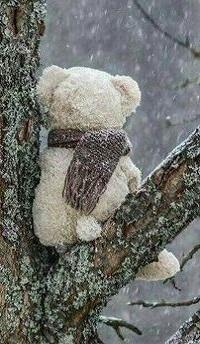 Аватар вконтакте Игрушечный мишка с шарфом сидит на ветке дерева
