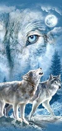 Аватар вконтакте Волки на фоне неба с луной и огромной морды их собрата