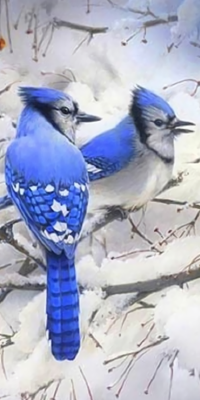 Аватар вконтакте Птицы кардиналы на дереве зимой