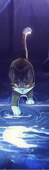 Аватар вконтакте Кошка дотрагивается лапкой до воды